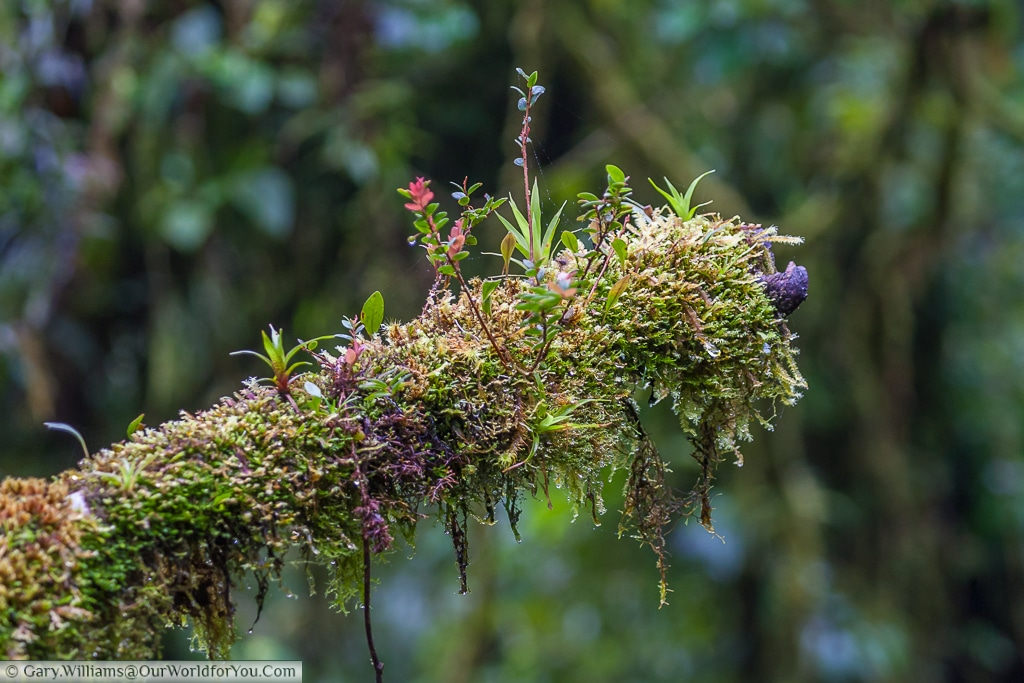 The high humidity in the cloud forest ensures life flourishes.