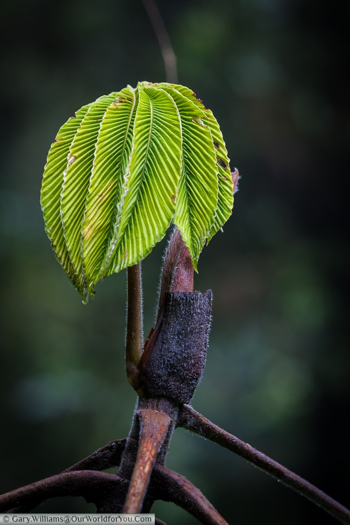 Fresh shoots of life, deep in the cloud forests of Monteverde.