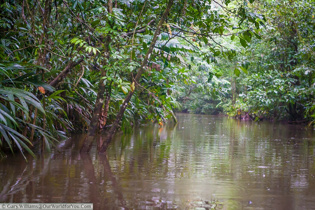 A view down one of the many tributaries that feed the lagoon at Tortuguero.
