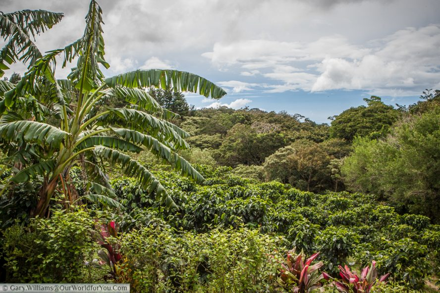 The view from the veranda, over the Don Juan coffee plantation, Monteverde.