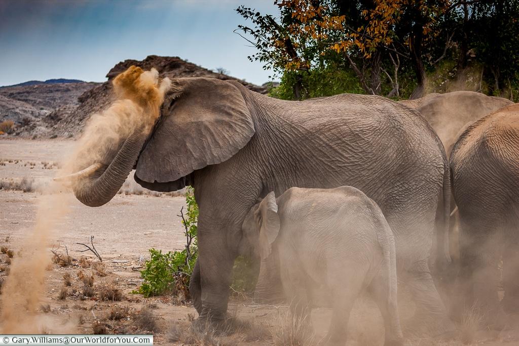 A little dust in your eye, desert elephants, Kunene Region, Namibia