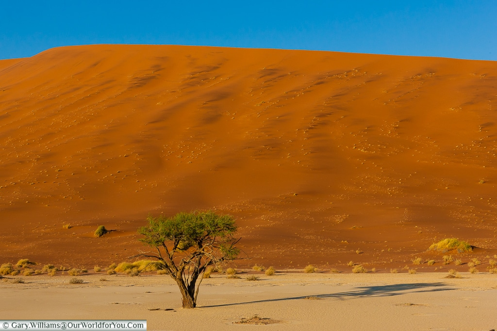 A lone living Acacia tree in the pan of Deadvlei, Sossusvlei, Namibia