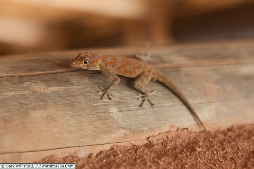 An extra guest at Camp Kipwe, Twyfelfontein, Namibia
