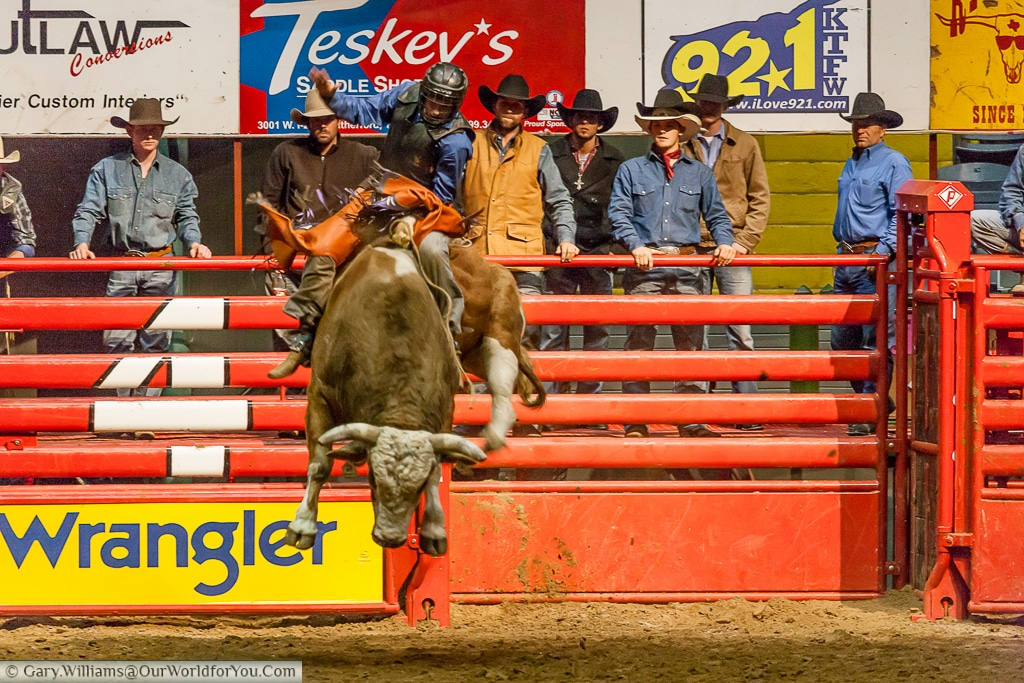 Getting some air at the Stockyards Championship Rodeo, Fort Worth, Texas