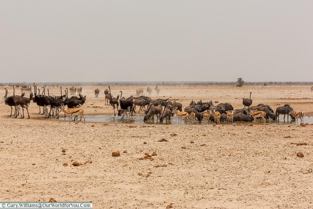 A mixed bunch, Etosha, Namibia