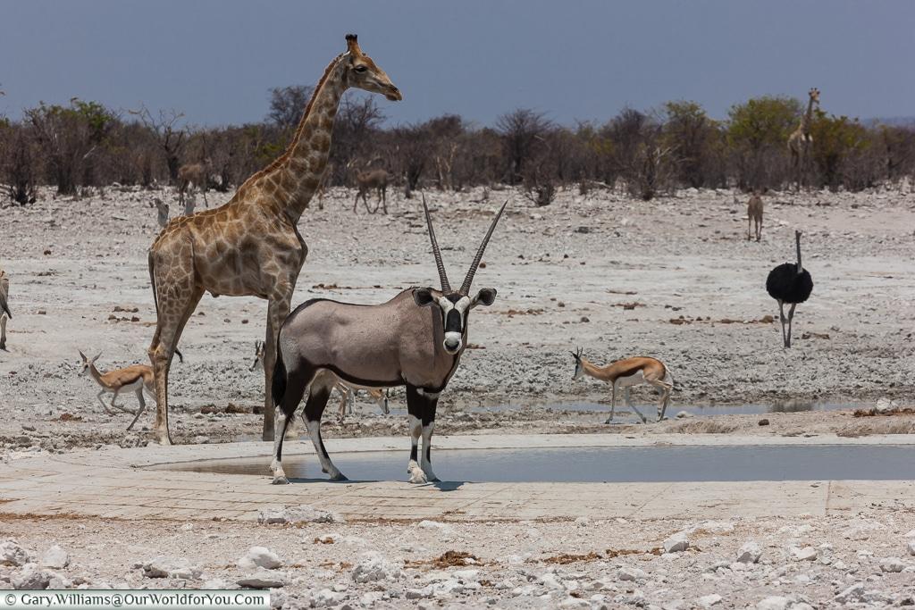 An oryx & others, Etosha National Park, Namibia