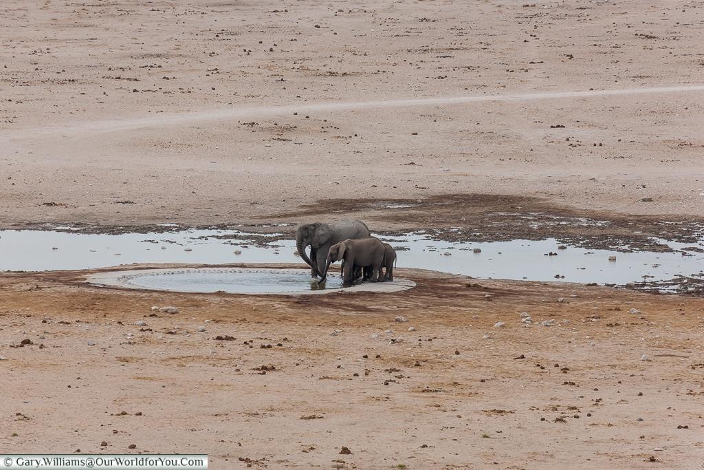 Couple of Elephants at the hole, Etosha National Park, Namibia