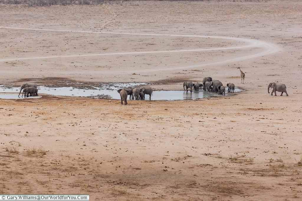 Elephants at the watering hole, Etosha National Park, Namibia