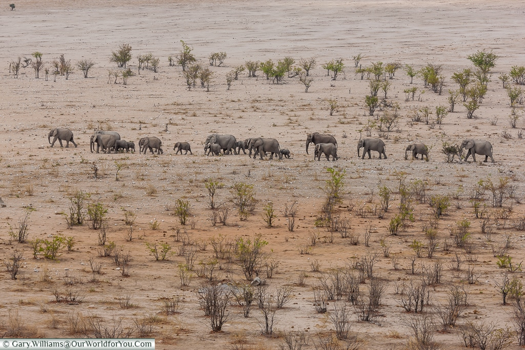 Elephants on the plain, Etosha National Park, Namibia