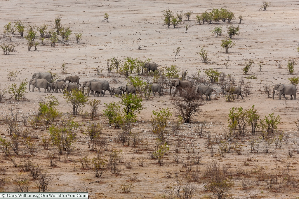 Elephants on the plain - Hidden by trees, Etosha National Park, Namibia