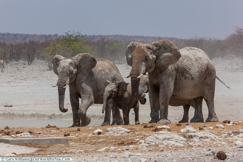 Family of Elephants, Etosha National Park, Namibia