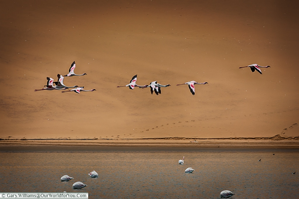 Flying low, Sandwich Bay, Namibia
