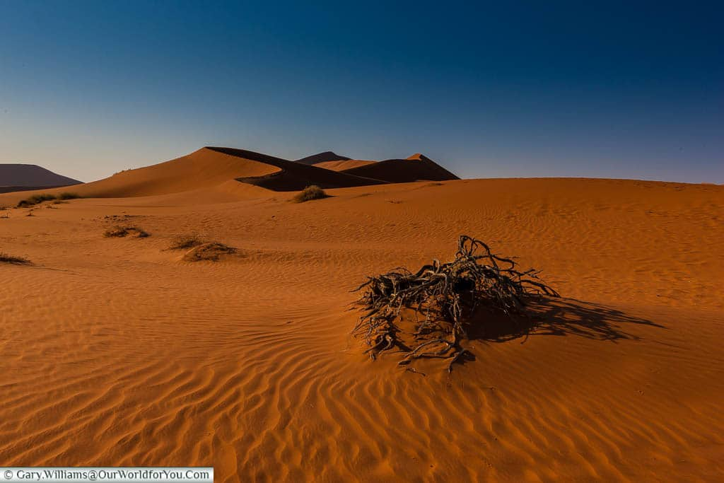A wilted bush in the sand in front of a dune in Sossusvlei, Namibia