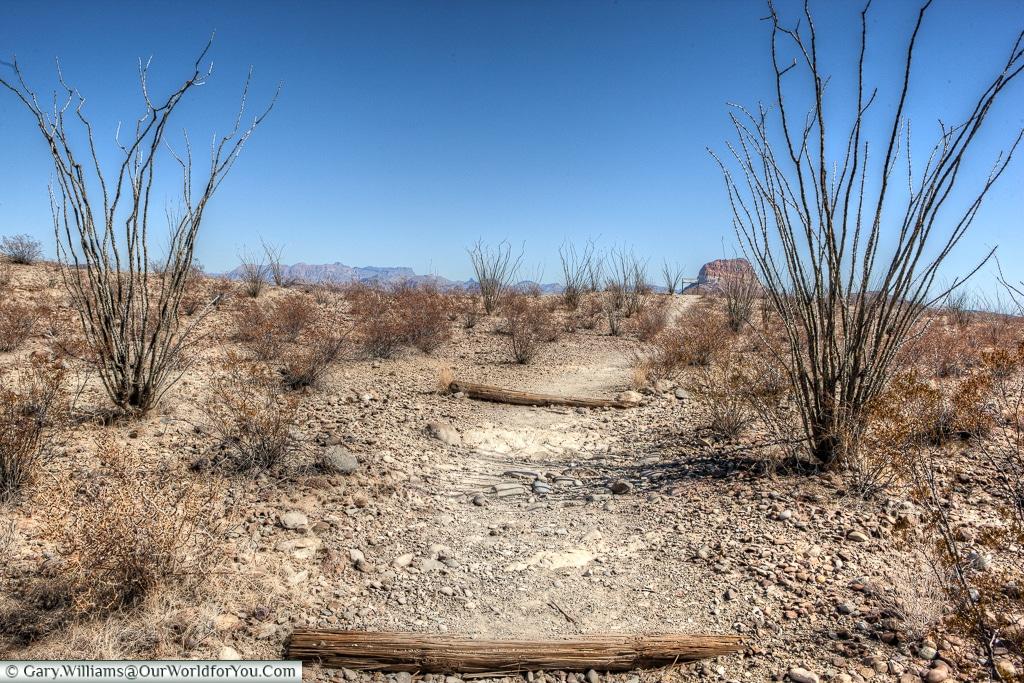 A pathway, Big Bend NP, Texas, USA