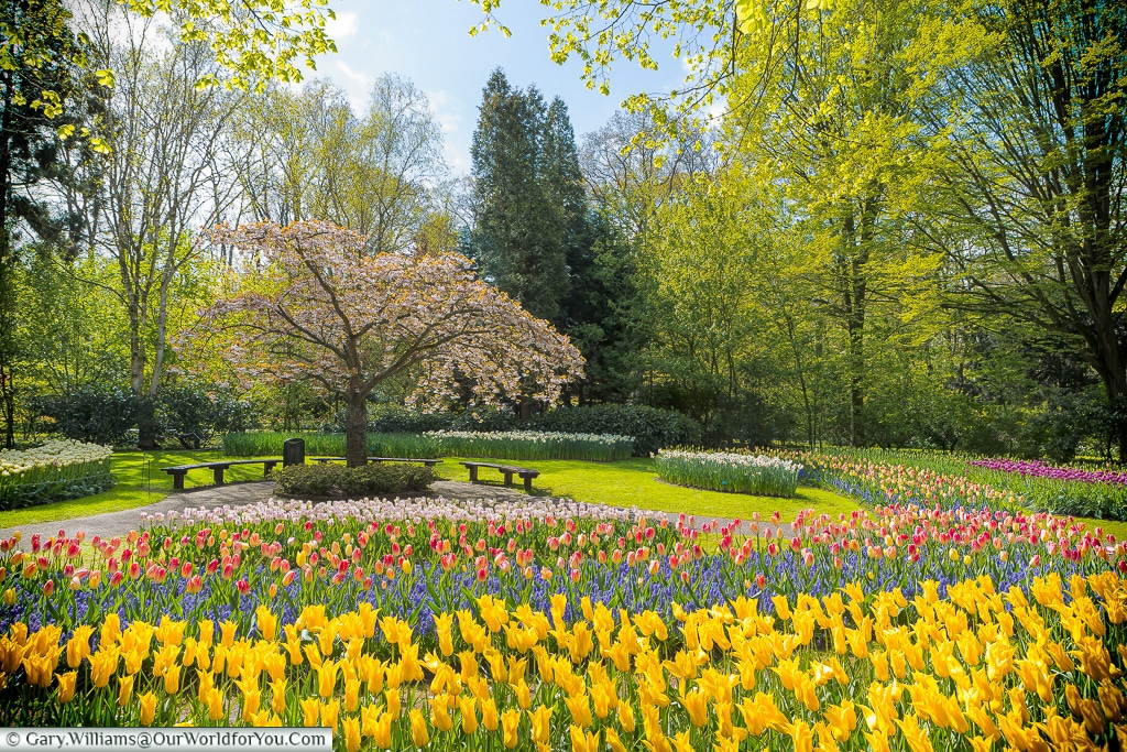 A place of peace, Keukenhof, Holland, Netherlands