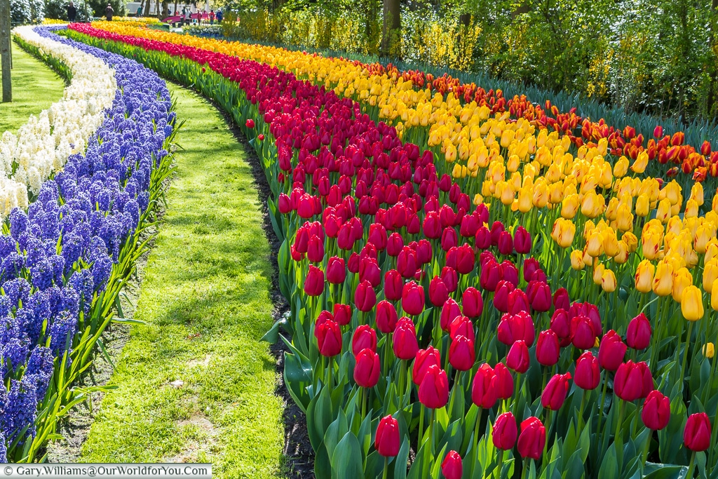 Coloured Ribbons, Keukenhof, Holland, Netherlands