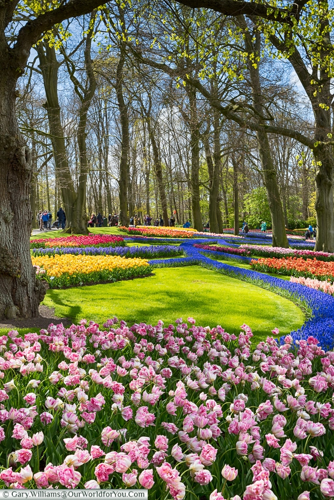 The multi-coloured display, Keukenhof, Holland, Netherlands
