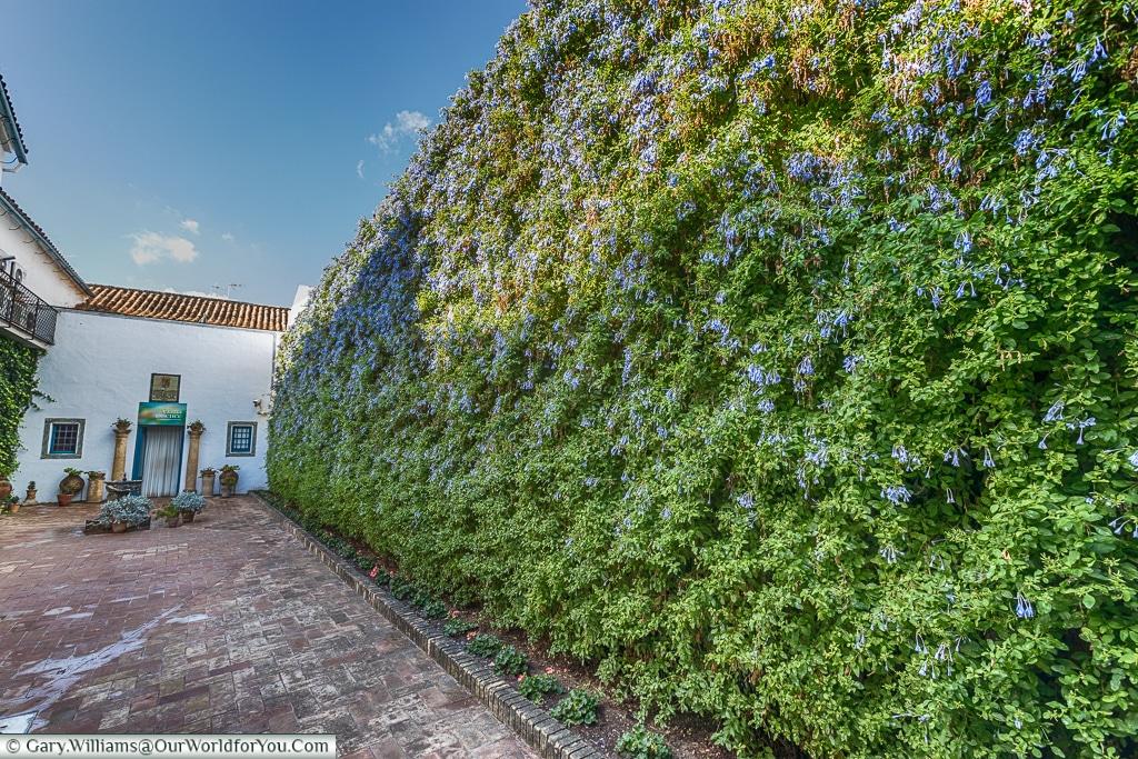 The vertical garden of Plumbago, Palacio de Viana, Córdoba, Spain