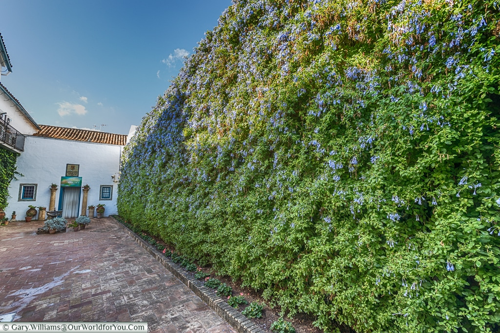 The vertical garden of Plumbago, Palacio de Viana, Córdoba, Spain