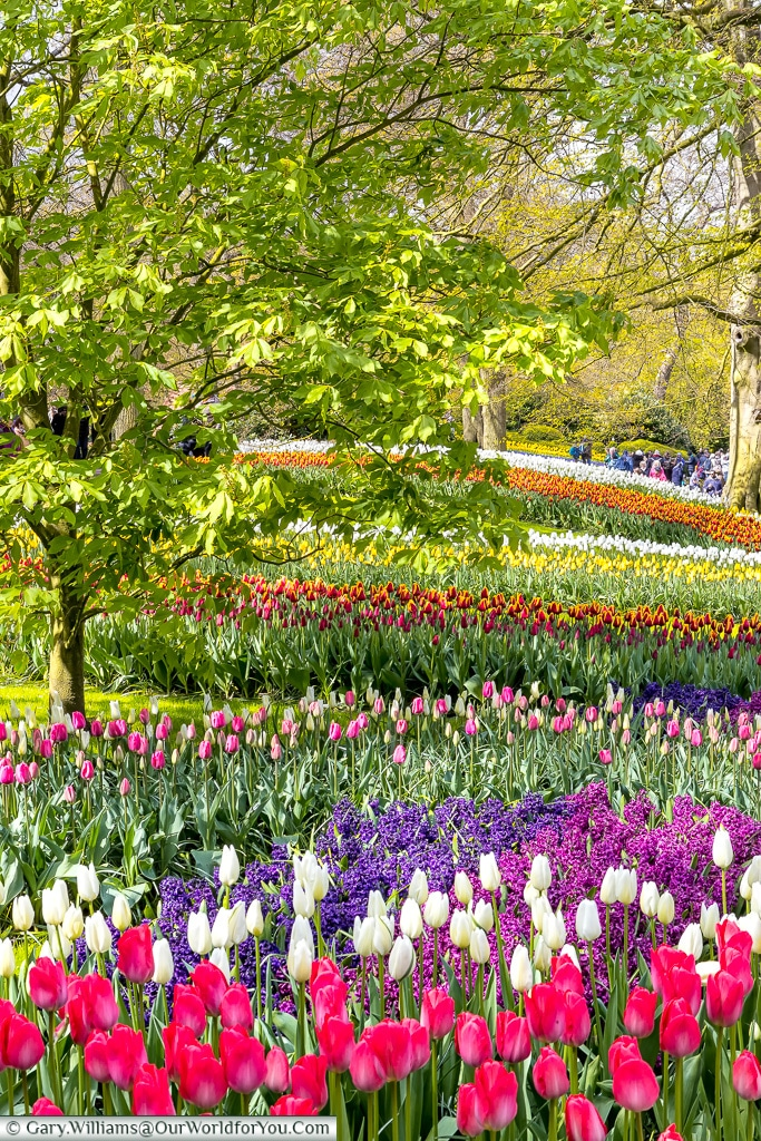 fields of colour, Keukenhof, Holland, Netherlands