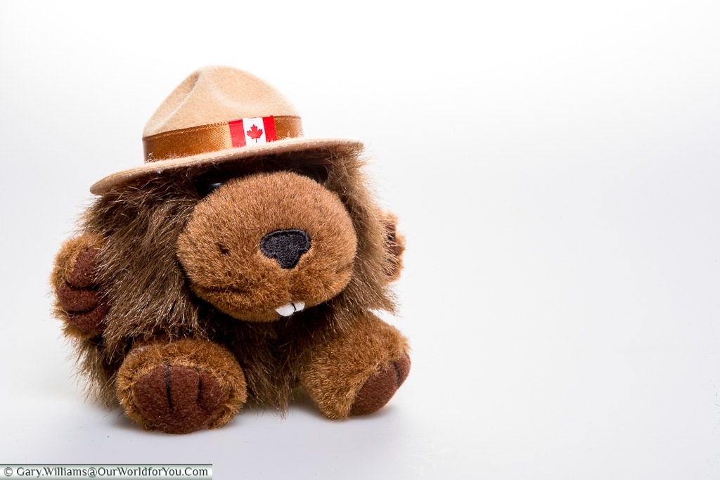 Bertie the Beaver - Straight from Canada