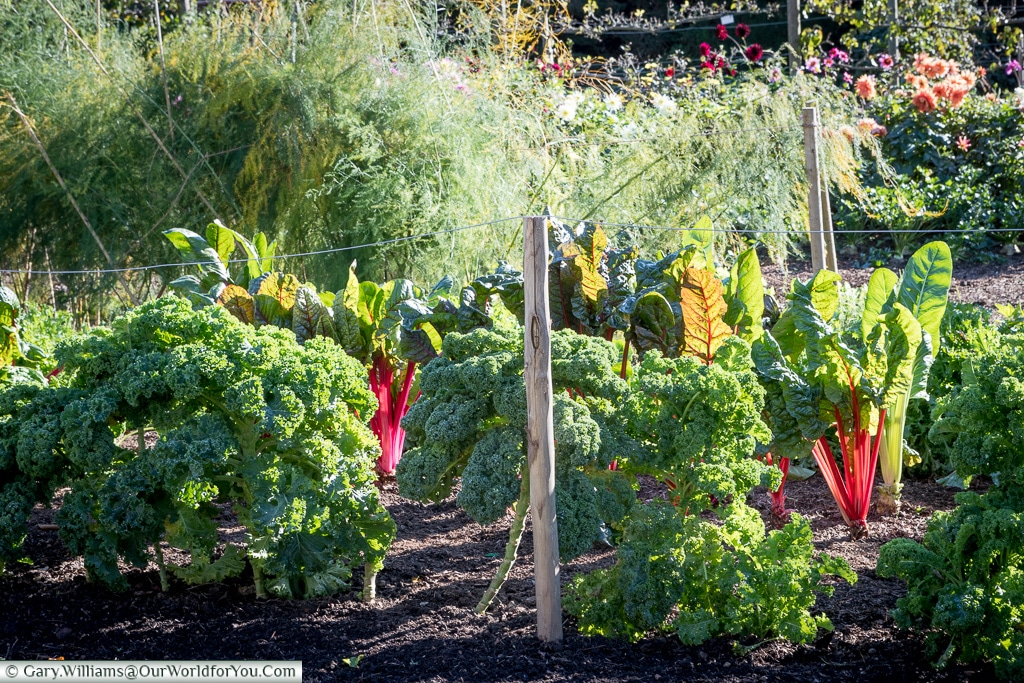 The vegetable garden at Walmer Castle, Walmer, Kent, England, UK