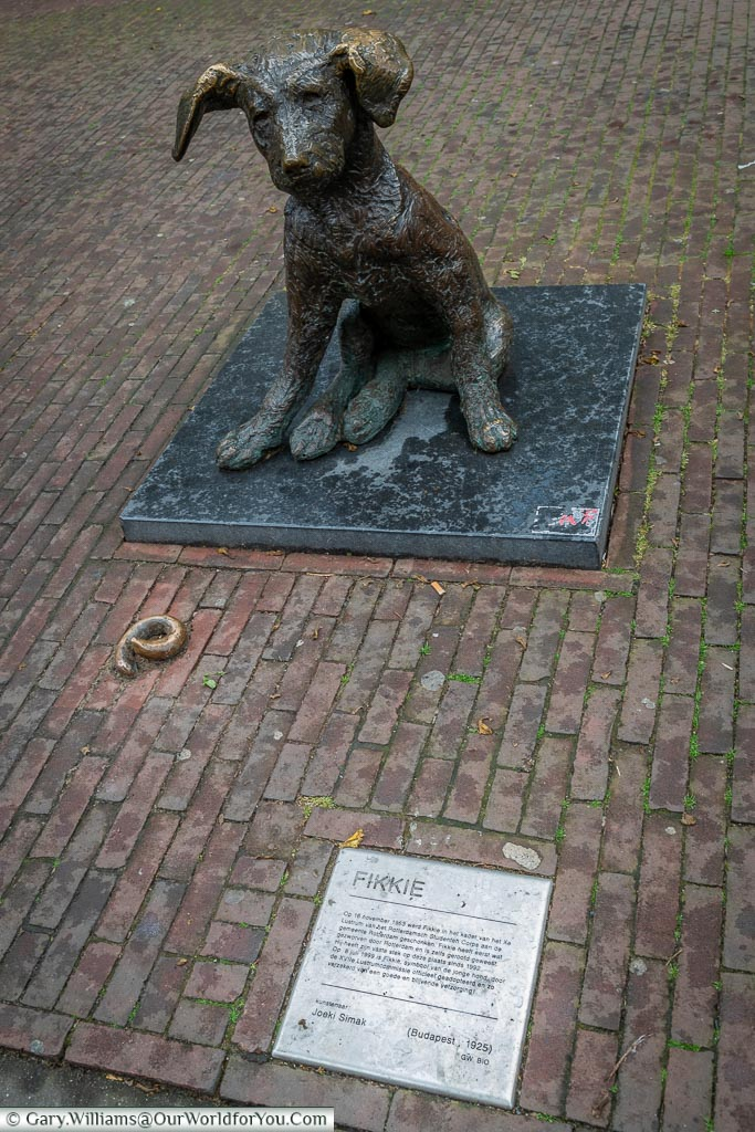 Fikkie the dog, Rotterdam, Netherlands