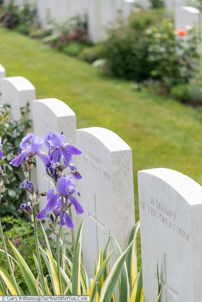 Flowers amongst the graves, Tyne Cot, Passchendaele, Belgium