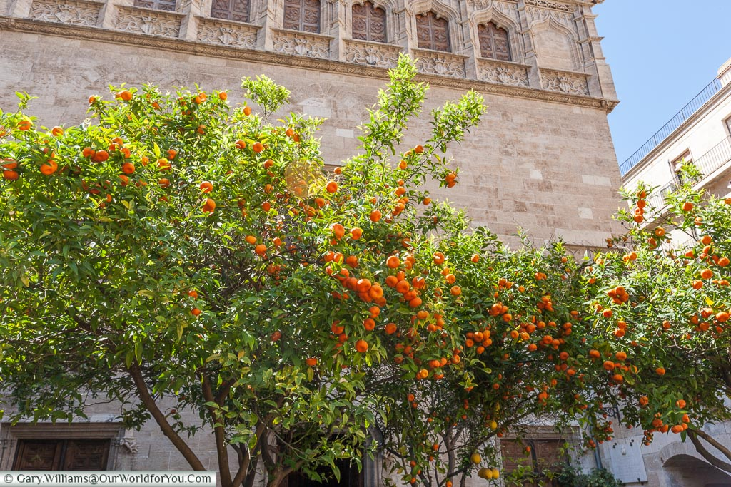 Oranges in the garden of the Silk Exchange, Valencia, Spain