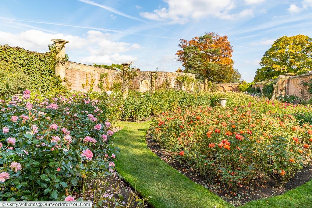 The Rose Garden, Hever Castle, Kent, England