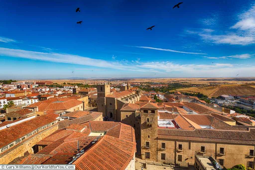 The birds fly high around San Francisco Javier church, Cáceres, Spain
