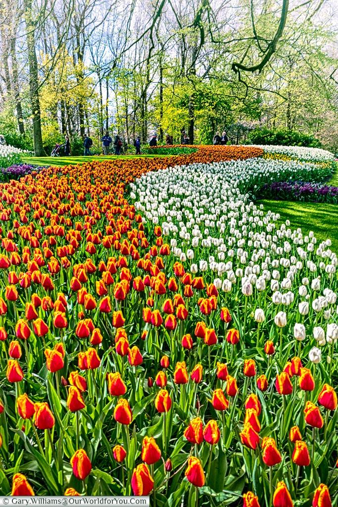 Beautiful displays at Keukenhof, Holland, Netherlands