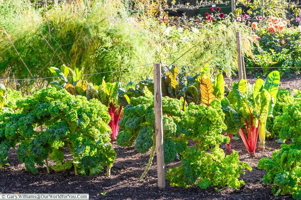 The vegetable garden at Walmer Castle, Walmer, Kent, England, UK