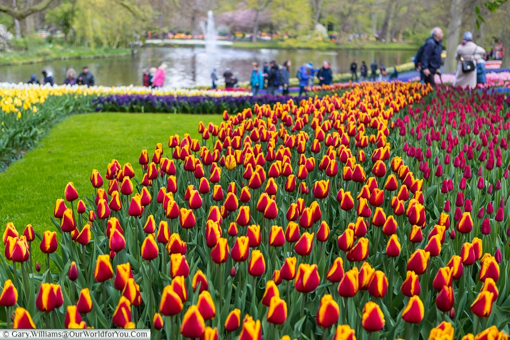 A wonderful place to explore, Keukenhof, Holland, Netherlands