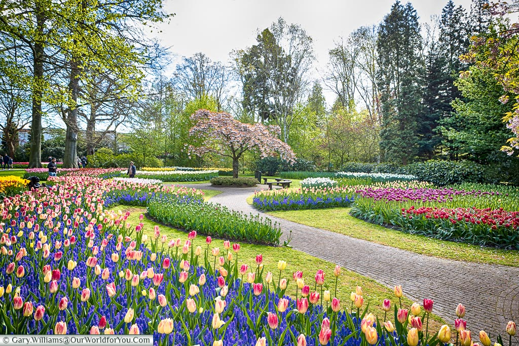 Select a path and wander, Keukenhof, Holland, Netherlands