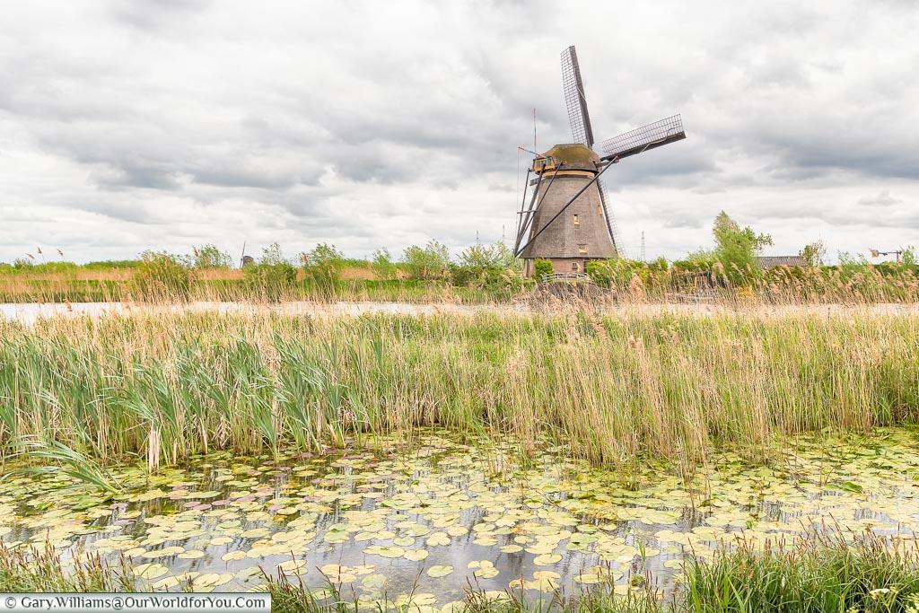 Through the reeds - a Windmill, Kinderdijk, Holland, Netherlands