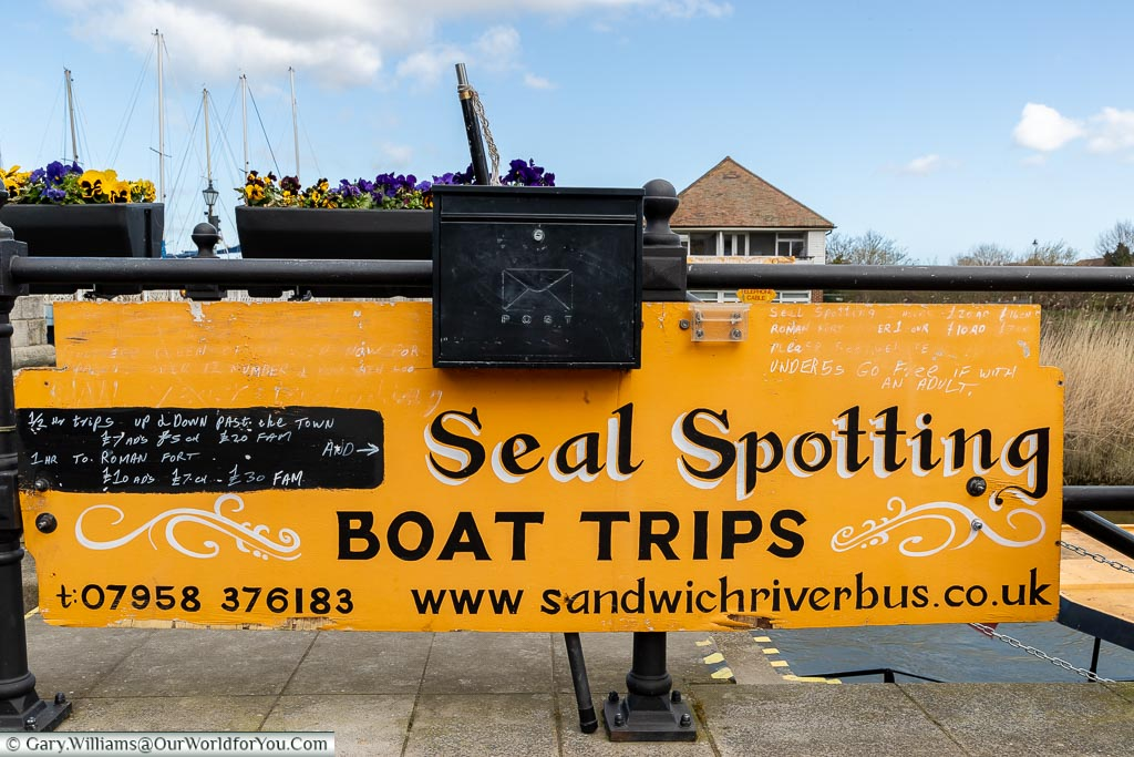 Seal Spotting, Sandwich, Kent, England, UK