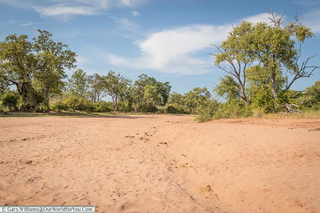 Dry riverbed, Bush Walk, Rhino Safari Camp, Lake Kariba, Zimbabwe