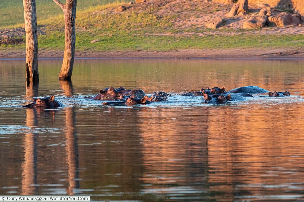 I can see you, Sundowner cruise, Rhino Safari Camp, Lake Kariba, Zimbabwe