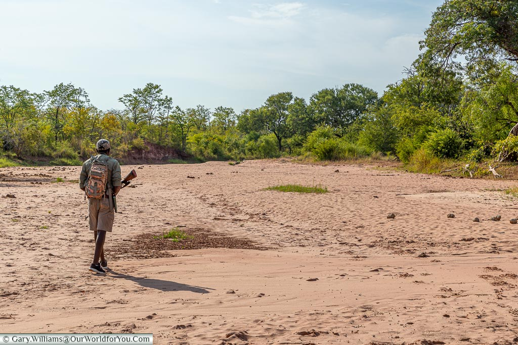 Tettindra guiding us through the dry riverbed, Bush Walk, Rhino Safari Camp, Lake Kariba, Zimbabwe