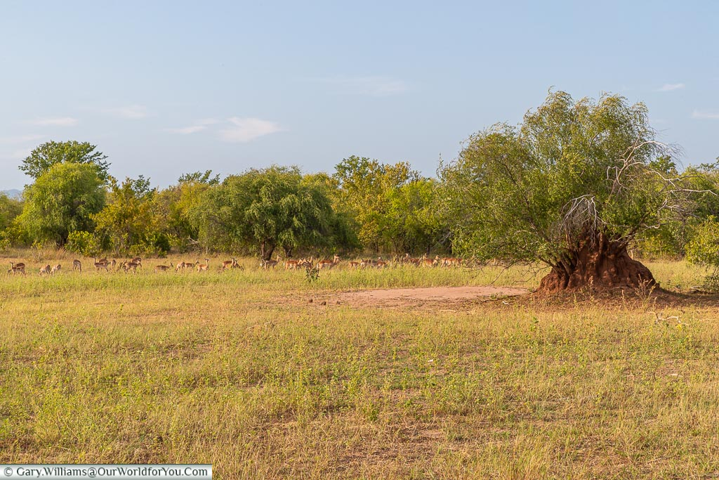 The park landscape, Bush Walk, Rhino Safari Camp, Lake Kariba, Zimbabwe