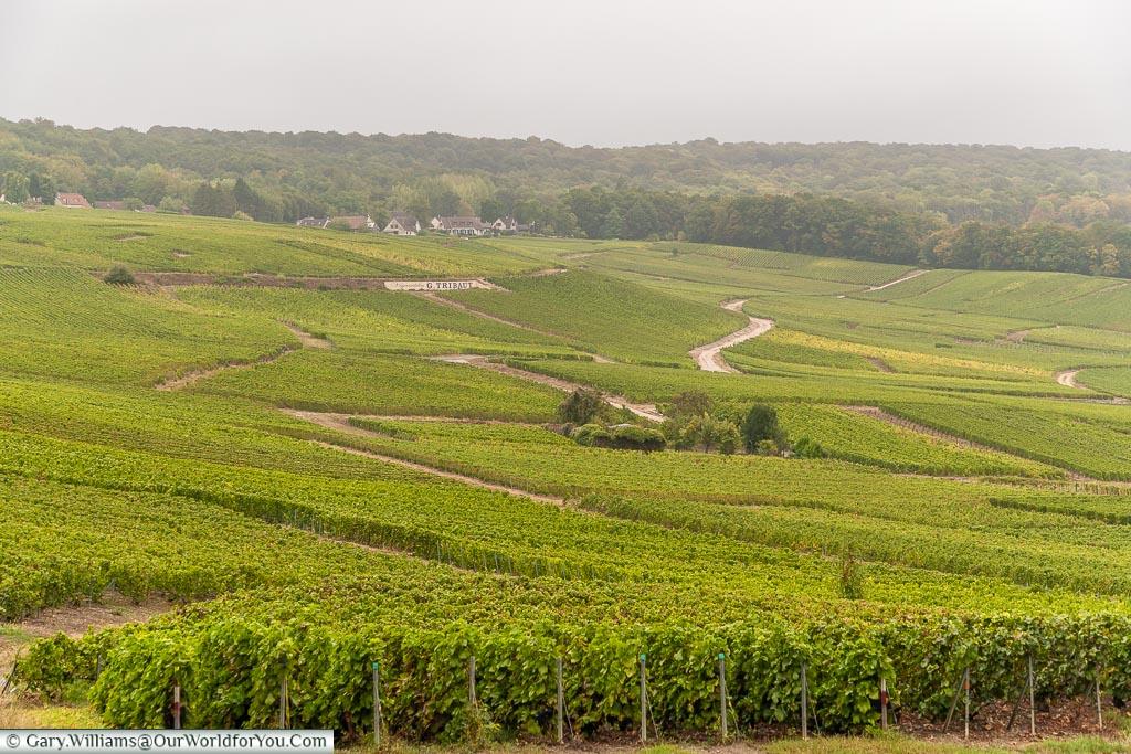 Vineyards just outside Hautvillers, Champagne, France