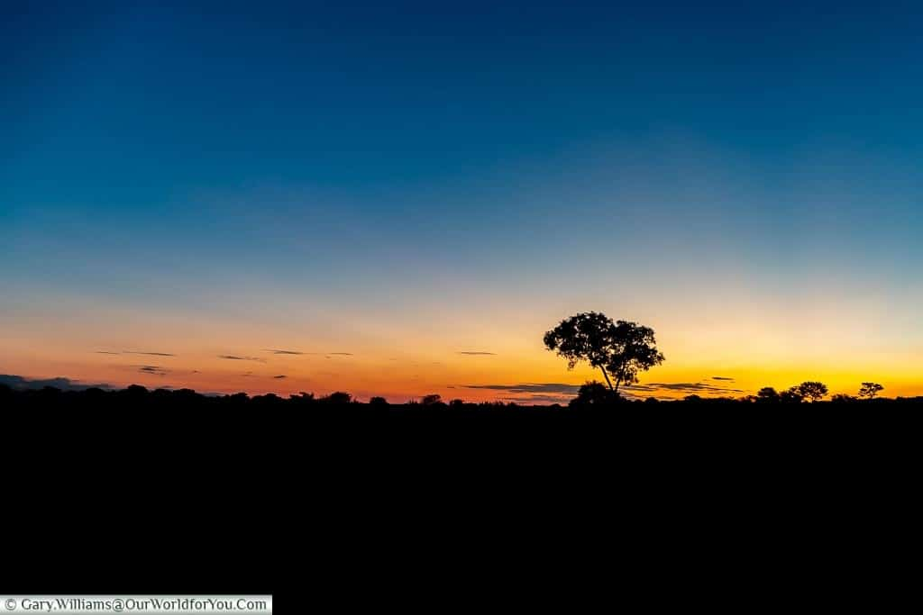 A sunset of blues to golden hues against a silhouette of a lone tree.