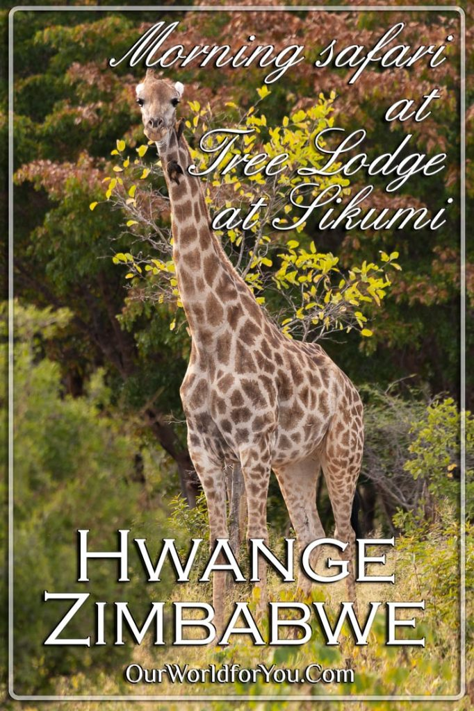 A Pin image for this post - Morning safari at Tree Lodge at Sikumi, Hwange, Zimbabwe