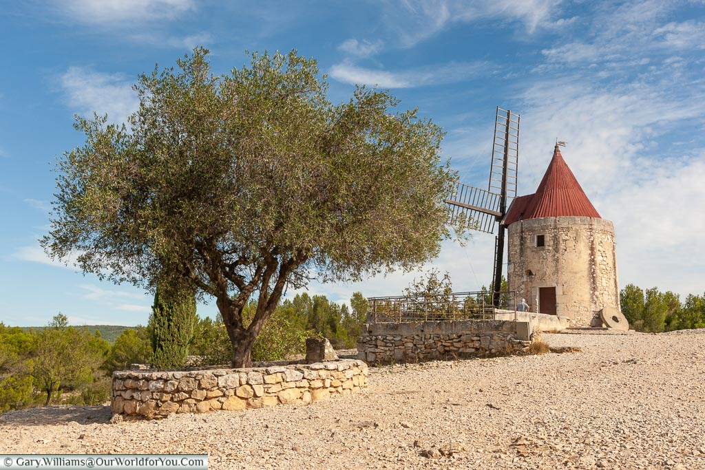 An olive tree close to an old stone windmill on the hillside outside the small town of Fontvieille.