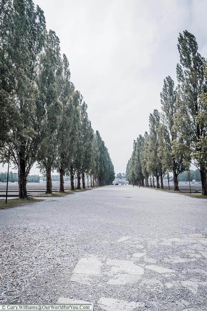 A look along the tree-lined central boulevard of the camp.