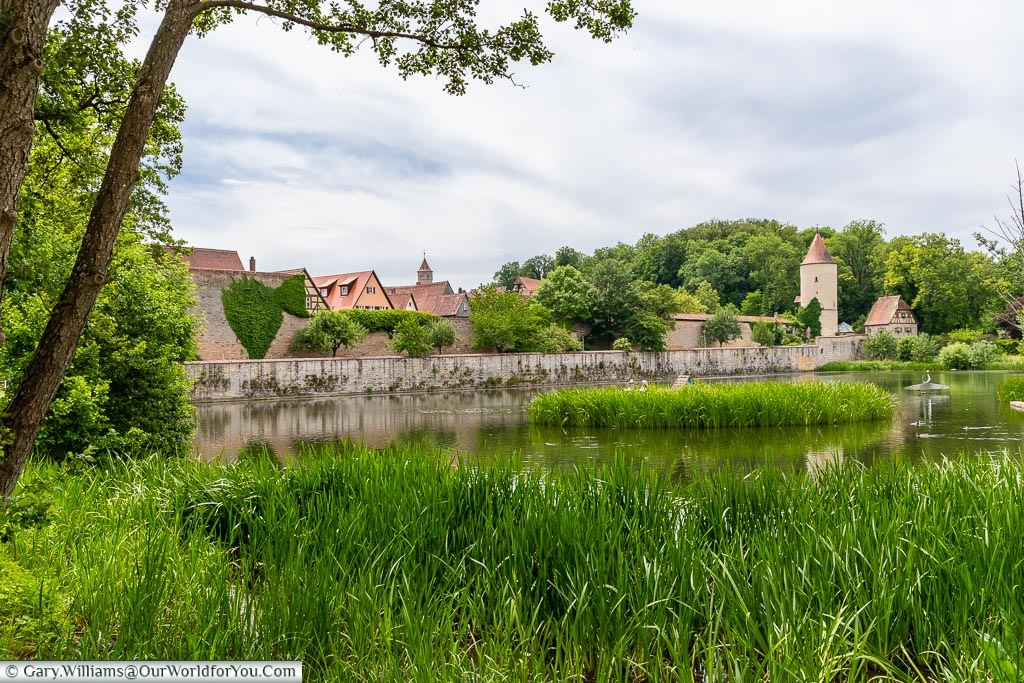 Looking across lush green long grass on the banks of a lake in front of Dinkelsbühl's medieval walls with the old town visibile.