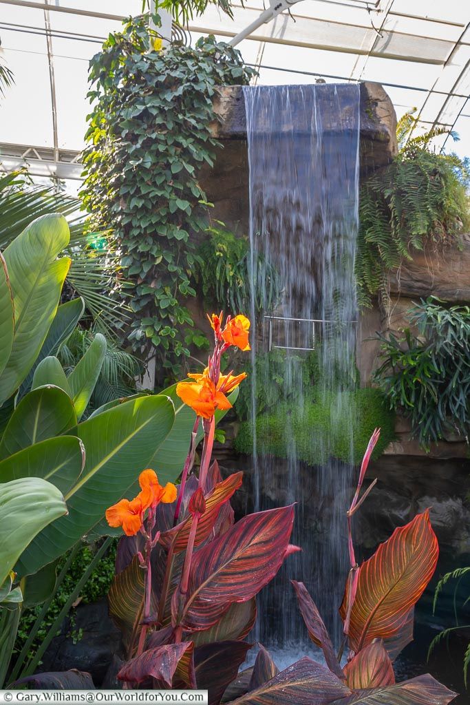 A bright orange flower against the backdrop of a man-made waterfall inside the Glasshouse.