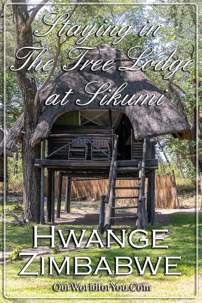 The pin image for our post 'Staying in The Tree Lodge at Sikumi, Hwange, Zimbabwe'