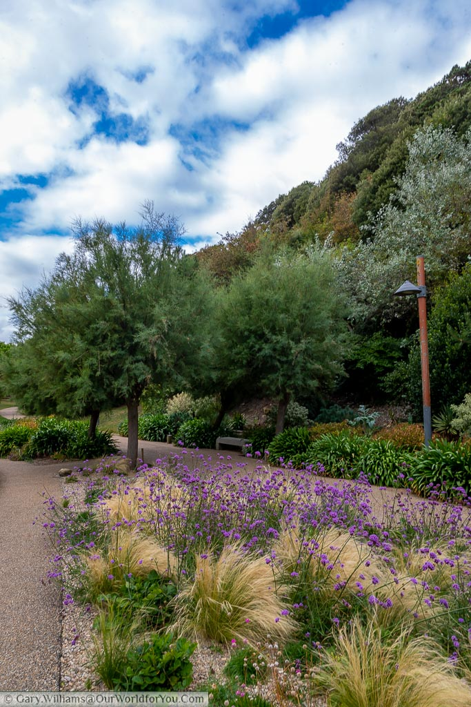 The Lower Coastal Walk, a tree-lined path with neatly kept flower beds full of decorative grasses and purple-headed fowers.